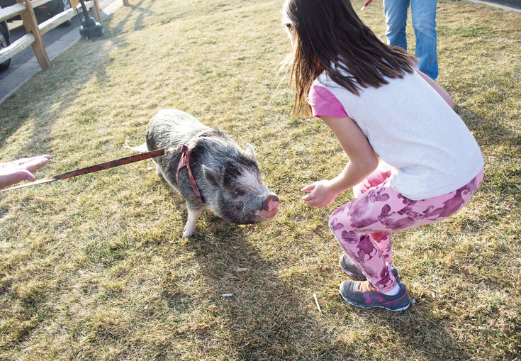 On National Pig Day on March 1, customers at Resolute Brewery got to experience potbellied pigs from Pig Haven Farm, a Pig Rescue in Colorado.