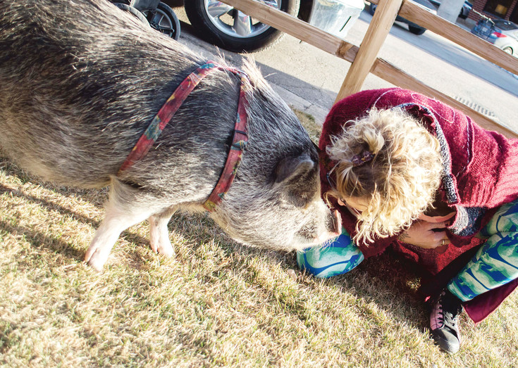 "Debbie McDonald's pig, Schrodinger, is a valued part of her family. She brought her pig to help raise awareness to the community. ""He sleeps in the bed with us at night,"" McDonald said."