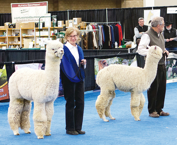 Owners show off their alpacas at the 2016 National Alpaca Show. The 2017 show will be March 17 to 19 at the National Western Complex in Denver. Admission is free.