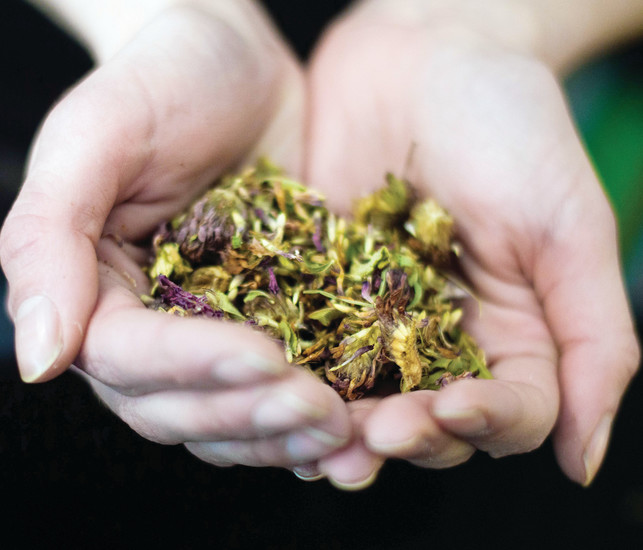 Dani Otteson, a community Herbalist and recently opened her business, Milkweed Herbarium, holds a handful of a tea blend.