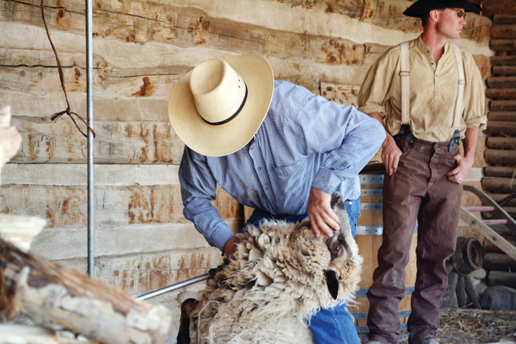 Bob Schroth of Strasburg shears a sheep at Littleton Museum on April 15.