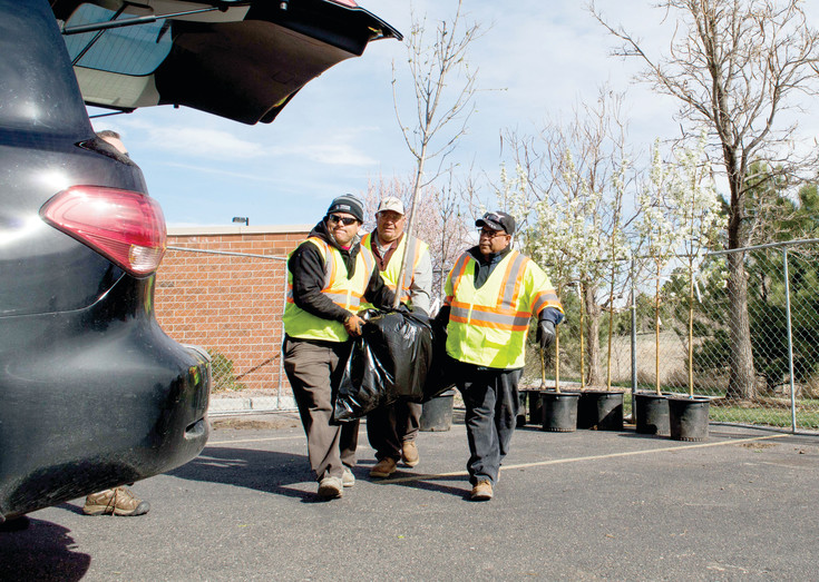 Three Lone Tree city workers carry a tree to a car on April 8 for Lone Tree's Tree Sale pick up.