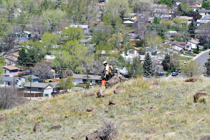 Andrew DuBois, education specialist for Jeffco Open Spaces, helps search for rattlesnakes on North Table Mountain on May 6.