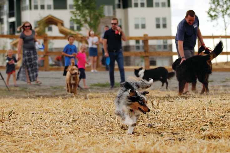 Excited attendees burst onto the field at the Grand Opening of USMC Cpl. David M. Sonka Dog Park in Parker. The park features open space, obstacles and separate sections for large and small dogs.
