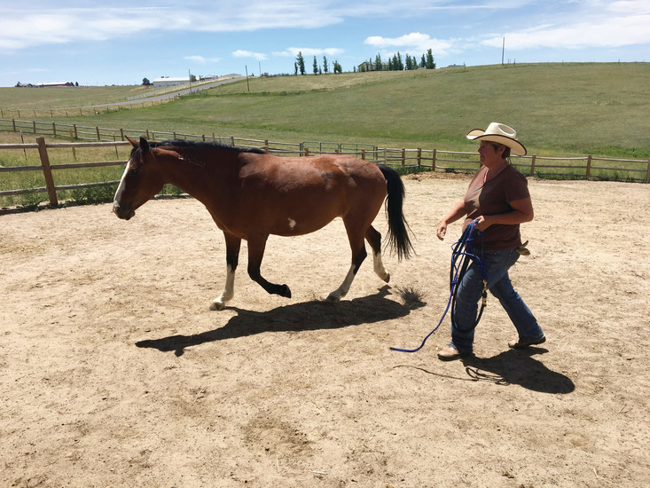 "Founder and Director of the Eagle's Nest Ranch Suzy MacKenzie keeps up her stride in the corral with Lucy, a rescued mustang she calls her ""personal horse""."