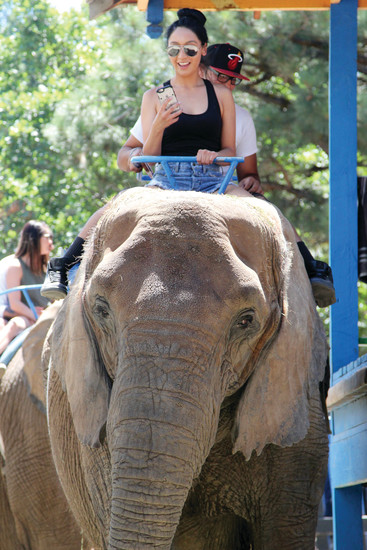 Young and old lined up to take an elephant ride during the Colorado Renaissance Festival on July 9.