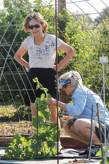 Brigitte Parker, left, and Margaret Hayward take in the sunshine and tie up pumpkin vines while volunteering at the Hidden Mesa Research Orchard on June 28. The orchard experiments with plant species that might do well in harsh climates like Colorado's and donates its surplus crops to the Parker Task Force food bank.