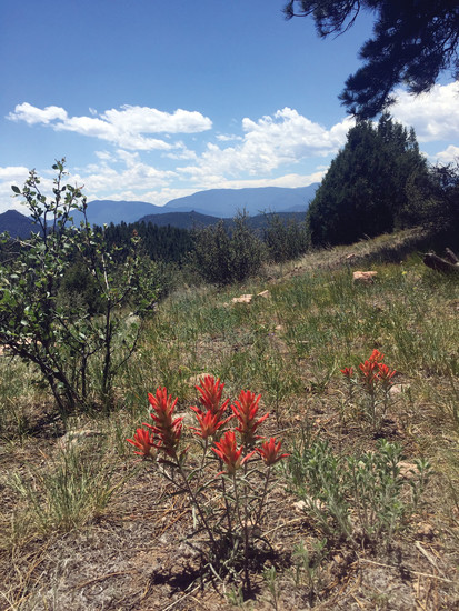 Reynolds Park in Conifer offers sweeping views and a fantastic flower display, including Castillija, most commonly known as Indian Paintbrush, or Prairie Fire.