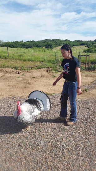 Alex Cerullo will take both chickens and turkeys to the Douglas County Fair and Rodeo poultry show this year. Cerullo says 4-H has taught her leadership and communications skills over the years.