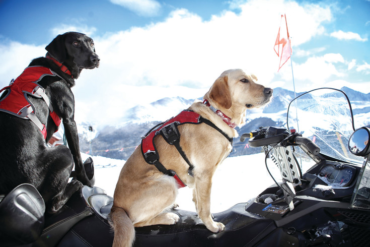 Colorado Rapid Avalanche Deployment (C-RAD) avalanche dogs pose on a snowmobile in the high country of the Rocky Mountains. Through July, Chuck and Don's pet store, which has locations across the Denver metro area, is asking customers to round up their total or make a donation for C-RAD.