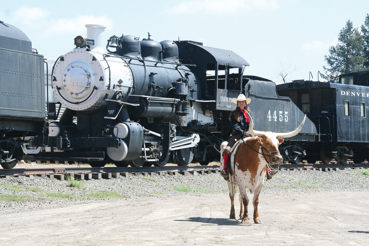 Blizzard, a Texas longhorn steer, and his rider Boo roam around the Colorado Railroad Museum in Golden during the Golden Chamber of Commerce's Cody Special VIP Luncheon on July 27, which took place to welcome the Cody Family to Golden during their family reunion.
