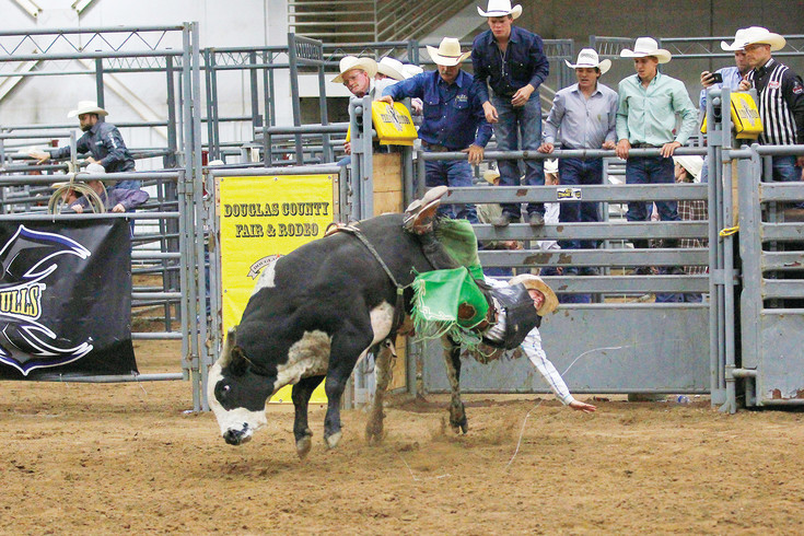 Cordell Curtis of Monte Vista, Colorado, prepares to land after a ride on his bull for the night, Shenanigans. More than $13,000 was awarded to the winning riders at the event.