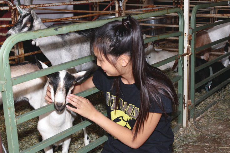 Skyla Fails, 14, of Brighton, visits her friend Gabriele Kirkmeyer's goat at the Adams County Fairgrounds, Friday, August 4. Fails is a student at Prairie View High School.