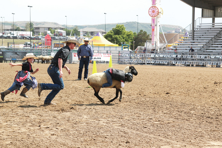 Crowds cheered for children in the Mutton Bustin' competition at the Douglas County Fair and Rodeo, where each participant hung onto sheep for as long as they could before falling off.