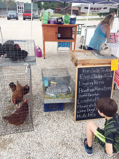 A local boy examines a Flemish Giant rabbit for sale at Bang's Bunnies on July 29 at the Town of Elizabeth Farmer's Market.