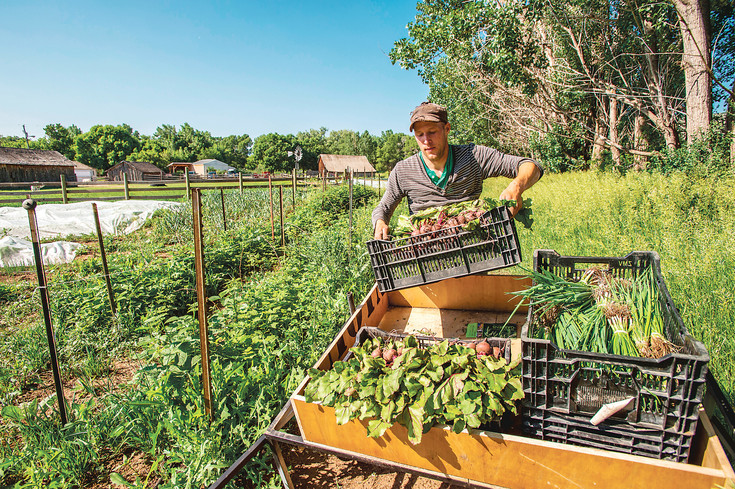 Chris Krabbenhoeft, a market grower with the Chatfield Botanic gardens who helps out with the Chatfield Farms Veterans Farm Program, loads the fresh veggies that will be available for purchase at one of the program's food stands in Denver.