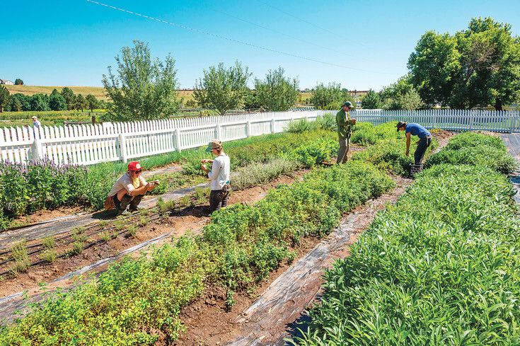 Four veterans work at Denver Botanic Gardens' Chatfield Farms earlier this year. The veterans are participating in the Chatfield Farms Veterans Farm Program, which provides the men and women who have served the country an opportunity to learn the skills needed to begin a career in agriculture.