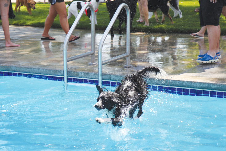 Dogs get the run on the pool each year before it is drained at the end of the season.