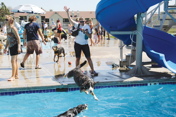 Becca Rehme cheers on her friend's dog Regan at the annual dog swim in Arvada.