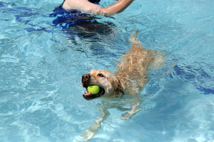 Fetch was one of the top activities for dogs in the pool Saturday.