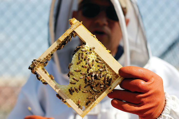 Busy bees work at creating a honeycomb despite the disturbance of beekeeper Joe Komperda. Komperda and his wife, Debbie, took up beekeeping about four years ago after seeing a presentation at the Oklahoma State Fair, and they currently maintain 27 hives throughout the south metro area.