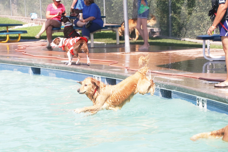 Ellie, a 3-year-old golden retriever, goes airborne into the pool to retrieve a tennis ball during the Sept. 9 doggie plunge at Pirates Cove in Englewood. Ellie's owner Kara Waldwieier of Littleton said it is a great event for her dog and for her. Each year after the water park is closed for the season a day is set aside for the doggie plunge which is a fund-raiser for Freedom Service Dogs.