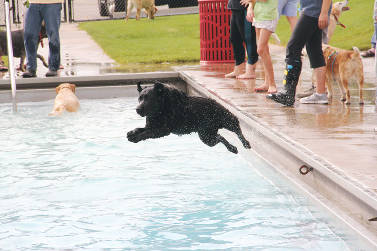 A dog jumps into the water at Holly Pool at the Yappy Hour event Saturday, Sept. 9. South Suburban Parks and Recreation's end-of-season event offers beer to dog owners and non-alcoholic drinks and snacks to children, who watched as the dogs roamed free.