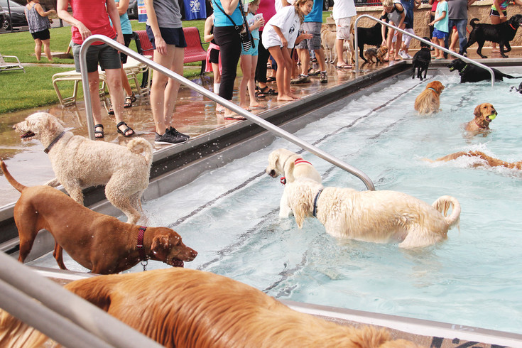 Several dogs wade in, climb out, jump in and swim around at the Yappy Hour event at Holly Pool Sept. 9 in Centennial. Dozens of dogs played with each other, chased each other and shook off water all over the humans watching