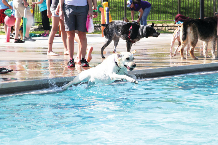 The Pooch Plunge, hosted by the Castle Rock Parks and Recereation department, opened up the doors of the pool at Butterfield Crossing Park for residents to bring their dogs for a day of fun.