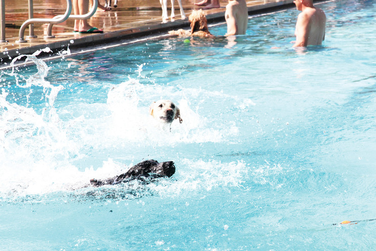 Fetch was a popular game at the Pooch Plunge event in Castle Rock on Sept. 9, as dogs retrieved a variety of toys from the Butterfield Crossing Park pool.