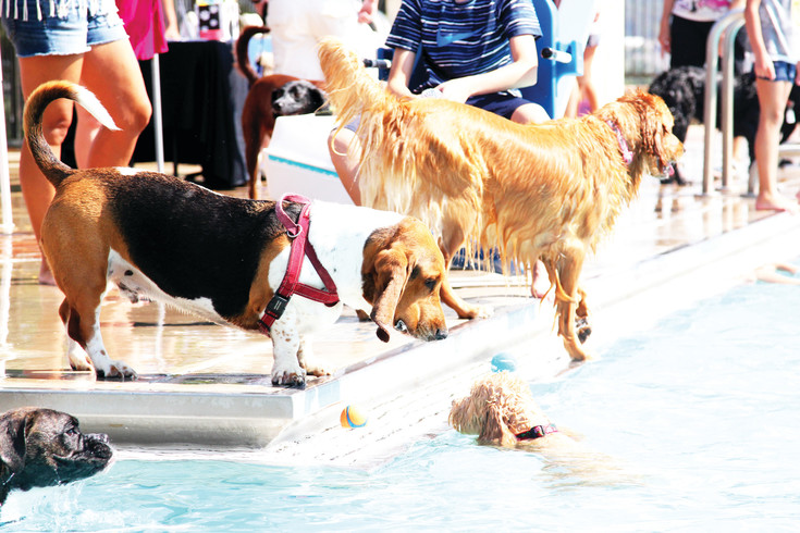 Some dogs were eager to splash in the pool at Castle Rock's Pooch Plunge, while others preferred socializing poolside.