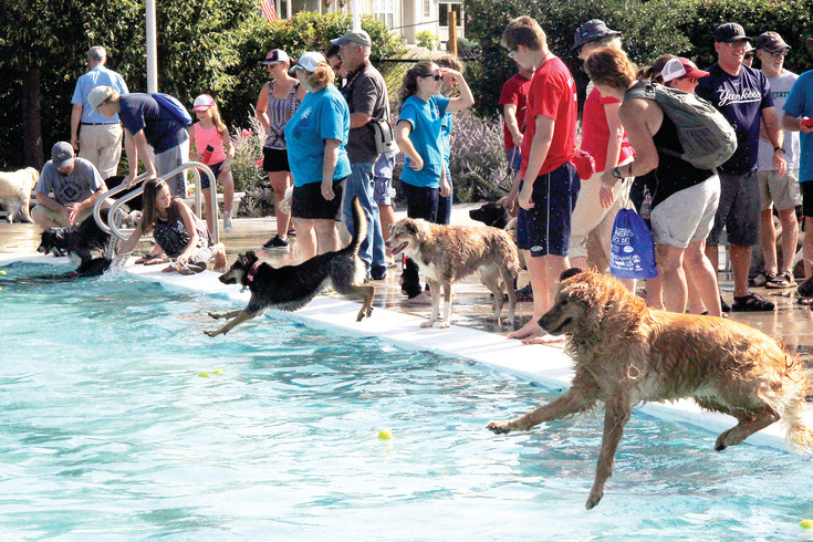 Doggie divers kick off the day at 2017's Barker Days. More than 1,200 dogs were anticipated to attend the annual event at H2O'Brien Pool on Sept. 9.