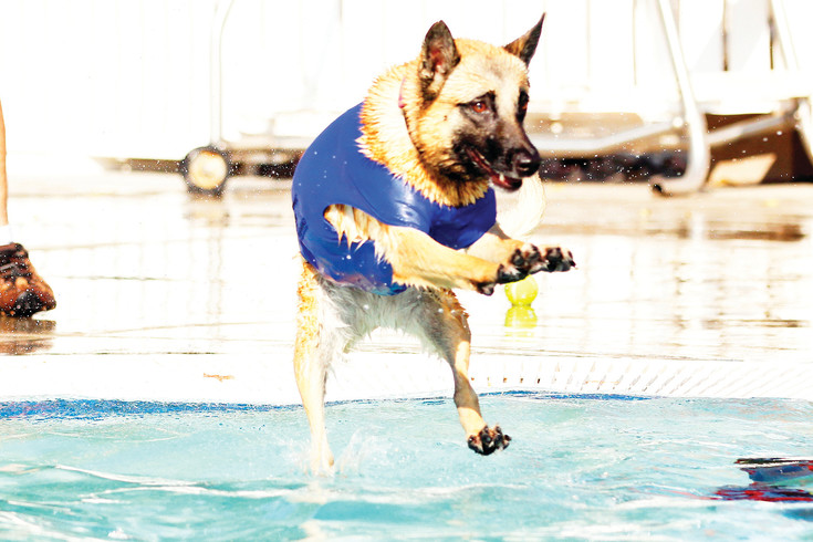 An energetic pup prepares for splashdown at the H2O'Brien Pool on Sept. 9. The annual event, held after the pool closes to human swimmers, features free treats and other items from vendors and Parker's Department of Recreation and Open Space.