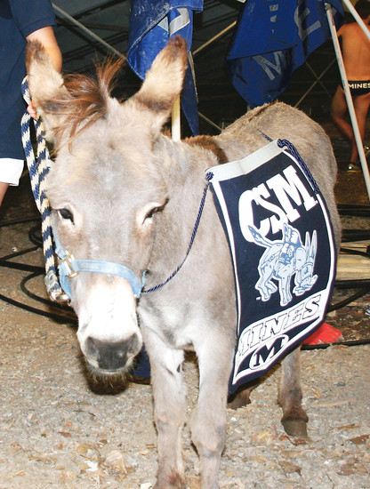 Blaster, an oversized miniature burro, first became a symbol of the Colorado School of Mines sometime in the 1960s, and has been a part of school spirit activities ever since.