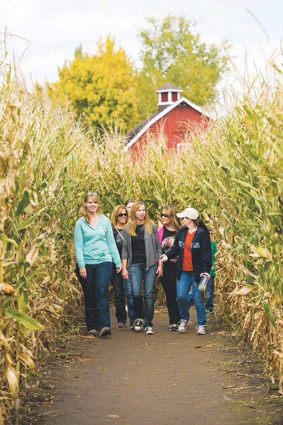 Denver Botanic Garden's corn maze in Littleton provides visitors with seven acres of corn to explore.