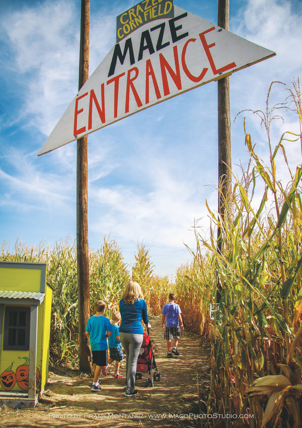 Thornton's Maize in the City is family friendly place for guests to explore, buy pumpkins and grab a bite to eat.