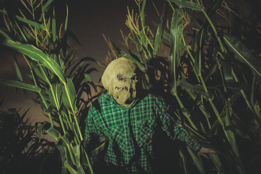 Thornton's Maize in the City features both a family friendly feature and Haunted Field of Screams for guests.