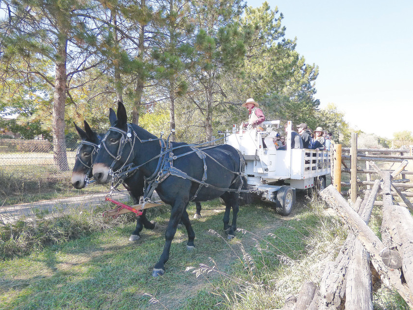 Moose Pier guides mules Black and Decker on a hayride around the perimeter of the 1860s farm.