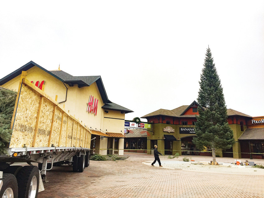 A giant white fir Christmas tree arrived early the morning of Nov. 2 at the Outlets at Castle Rock. The tree stands 55 feet tall and will remain at the center through the end of the year. In the coming weeks, branches that were removed from the base of the tree for safe transport will be reattached and more than 8,000 twinkling lights and 5,000 bows and ornaments will be added. The tree is being trimmed in preparation for the free, family-friendly Tree Lighting Concert on Nov. 11. This year's concert will include performances by pop boy band In Real Life, country music duo Waterloo Revival and 2016 CMA Global Artist of the Year Morgan Evans.