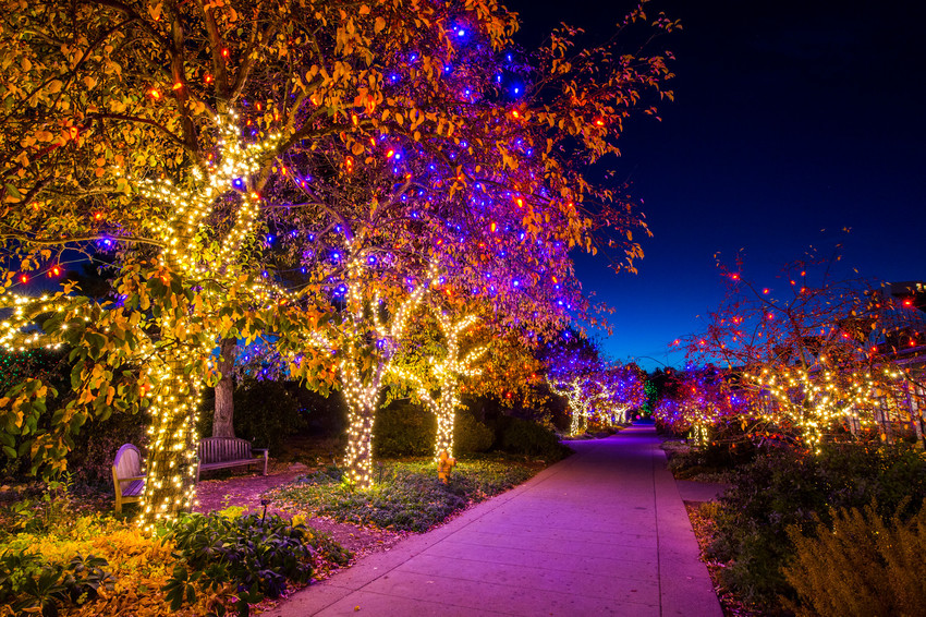 The Botanic Gardens' York Street location features thousands of lights, and is a popular spot for families, as well as for couples to get engaged.