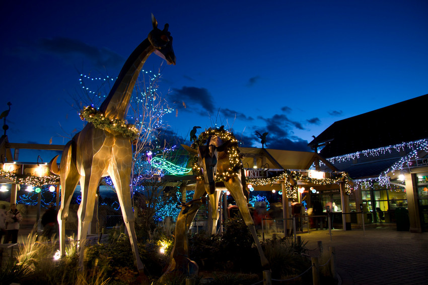 The Denver Zoo's 60 acres are full of lights and animated animal sculptures during Zoo Lights, which runs through Dec. 31.