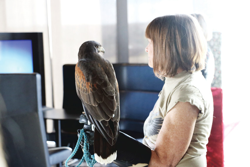 Susan Howard, a volunteer at HawkQuest in Parker, attends the first Douglas County Gives rally at Schomp MINI in Highlands Ranch on Nov. 29 with a hawk on her arm. HawkQuest is a nonprofit that benefits from the Dec. 5 Colorado Gives Day.