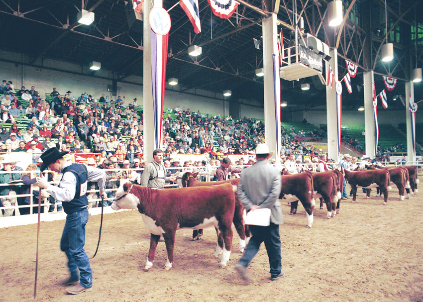 While the National Western Stock Show includes a huge trade show and other activities a major focus is livestock judging. Ten cattle breeds will hold their national show during the 2018 National Western that will be in Denver from Jan. 6 until Jan. 20.