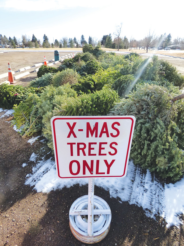 Christmas trees await the wood chipper in the west parking lot at Cornerstone Park at W. Belleview Ave. and S. Windermere Street. Old trees can be recycled at the lot, or at the Willow Spring Service Center at 7100 S. Holly Street in Centennial until Jan. 16.