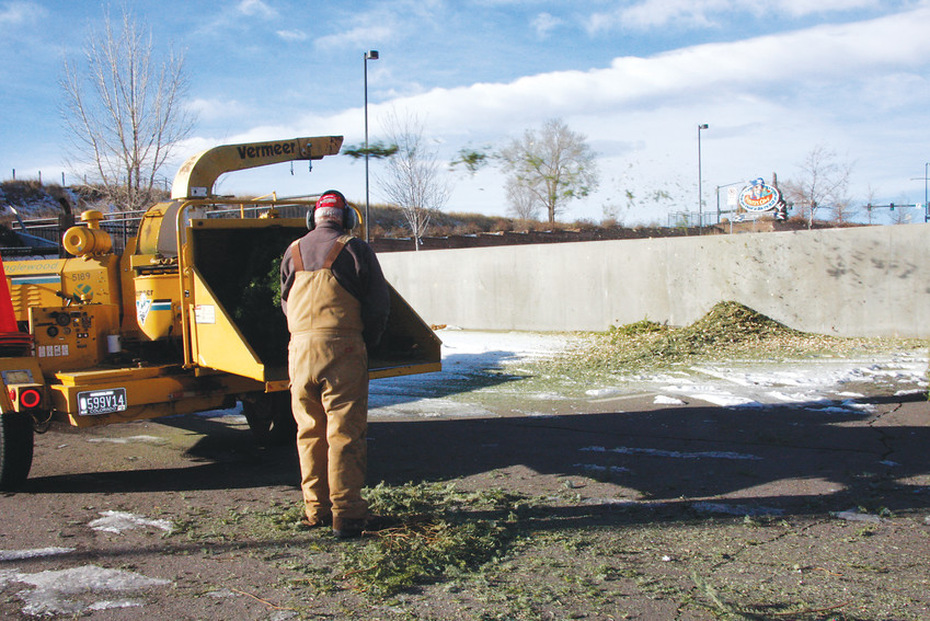 An Englewood employee recycles a Christmas tree by sending it through the wood chipper turning it into mulch. Again this year the city is recycling Christmas trees thar are brought to one of the four drop locations.