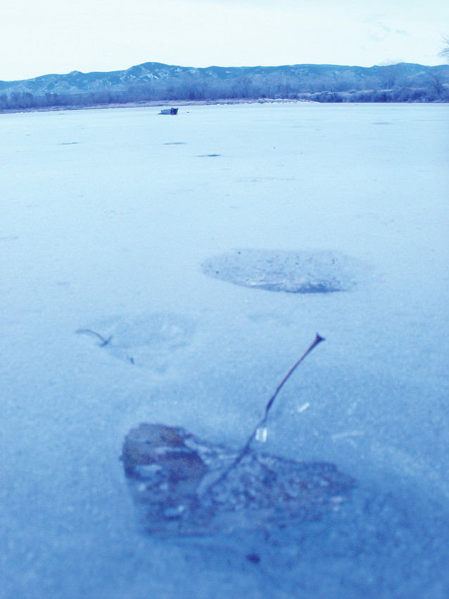 A leaf encsconsed in ice at South Platte Park.
