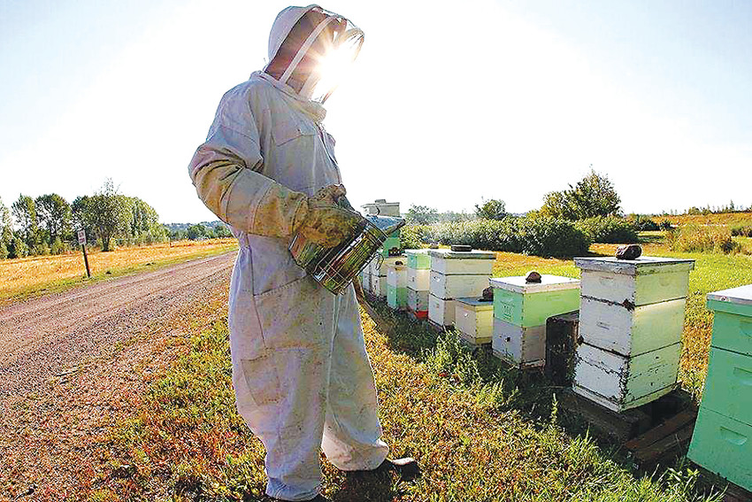 Colorado Hemp Honey founder, marine corps veteran and owner of Frangiosa Farms, Nick French, gathers honey from one of his hives.