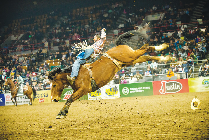 Bareback bronc riding drew large crowds Jan. 15 for the MLK African-American Heritage Rodeo during the National Western Stock Show.