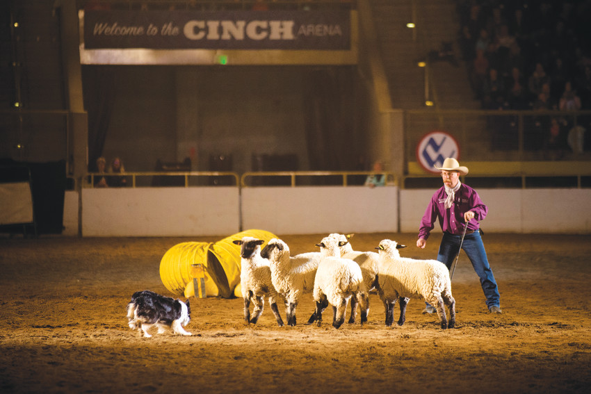 A herding dog demonstration proved that it wasn't all about cattle.