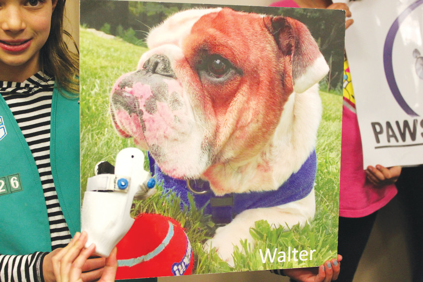 Walter, a rescue dog in Connecticut, will receive a prosthetic leg, like the one featured here, thanks to Girl Scout Troop 59 in Lone Tree, who raised $865 to cover his cost.